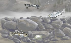 Nature-Fish 2
