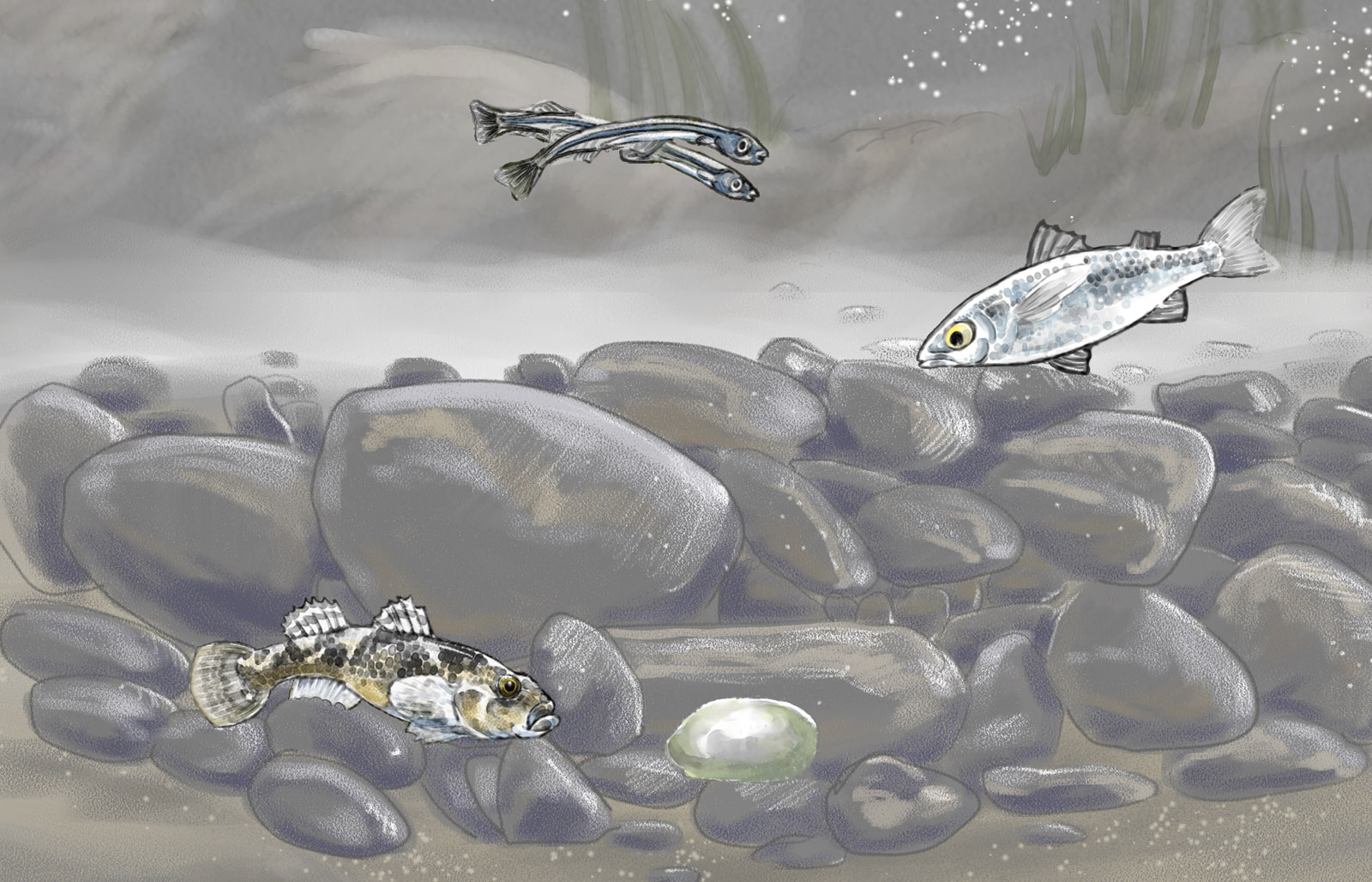 Painted fish of the Avon, number 2